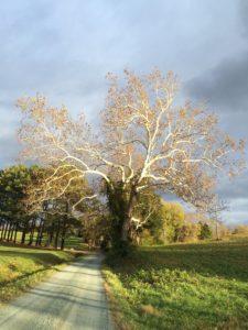 A tree in sunlight