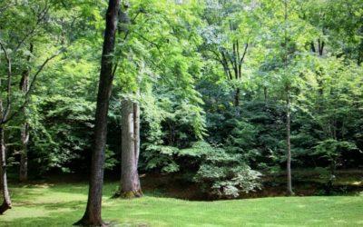 Rural Tranquillity = A Peaceful Brain